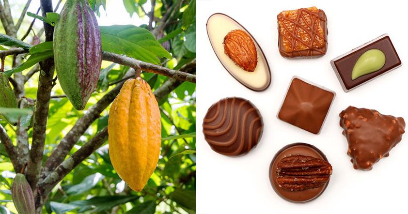 September 13th - International Chocolate Day